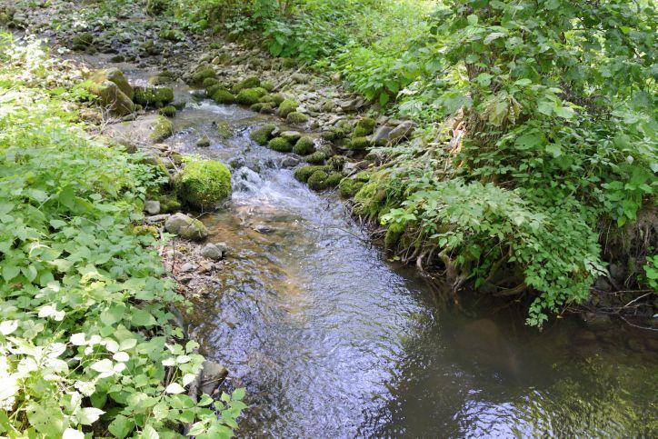 река Трескавец