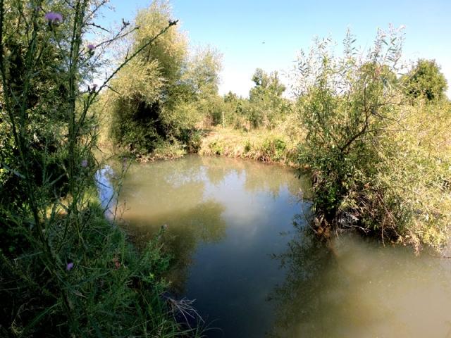 река Моравица